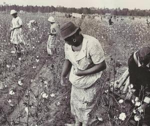 Arkansas Delta cotton pickers from days gone by